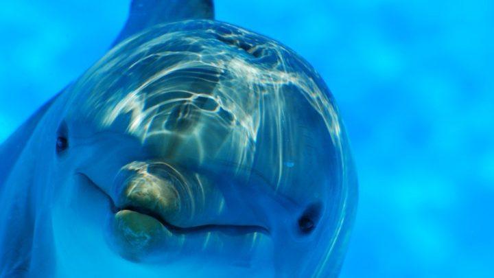 Having Dolphin Spirit Guides